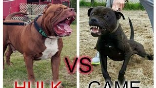 game pitbull - Free video search site - Findclip Net