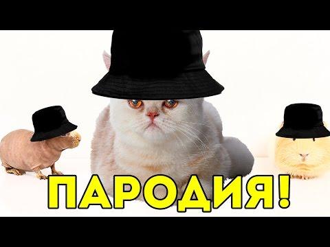ГРИБЫ – ТАЕТ ЛЁД (ПАРОДИЯ) / SvinkiShow