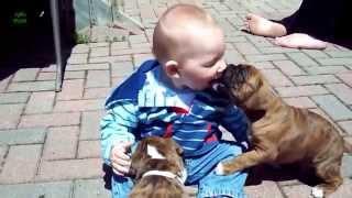 Bebekler ve Köpekler :)