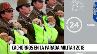 Cachorros en Parada Militar: Las imágenes que dieron la vuelta al mundo