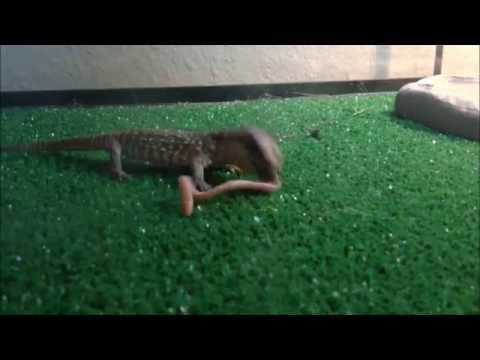 Kalabasa kandila mula sa mga worm