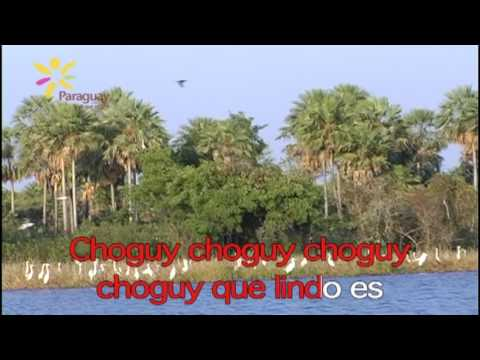 Pajaro Choguy - Paraguay Purahei
