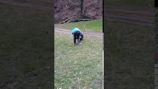 Spielen mit Welpen