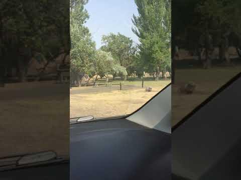 Video Of Goose Lake, OR