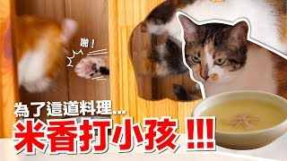 米香為這道料理出手了!貓的滴雞精【貓咪副食食譜】好味貓鮮食廚房EP132