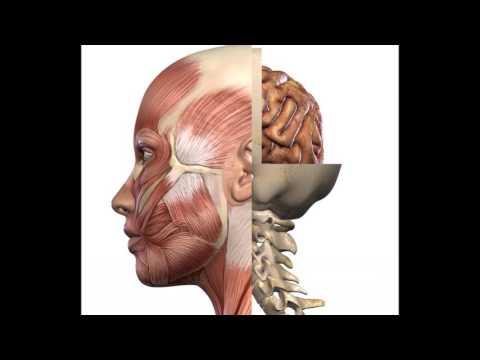 Fascioterapia & Craneal & Quiropraxia en Escuela de Salud PNA