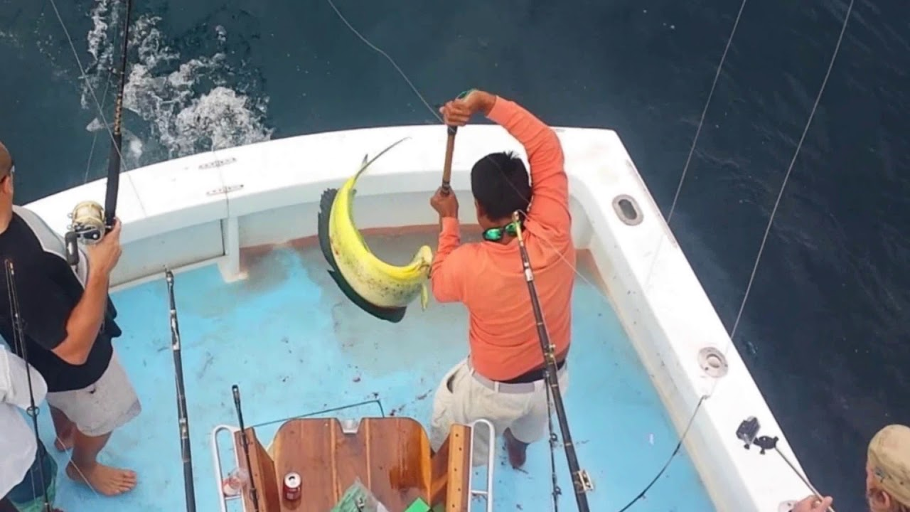 Dorado fishing with World Record Holder Captain Bobby McGuinness