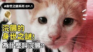 【浣腸的身世之謎!為什麼叫浣腸?】志銘與狸貓