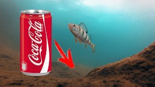 Ловля рыбы на кока колу