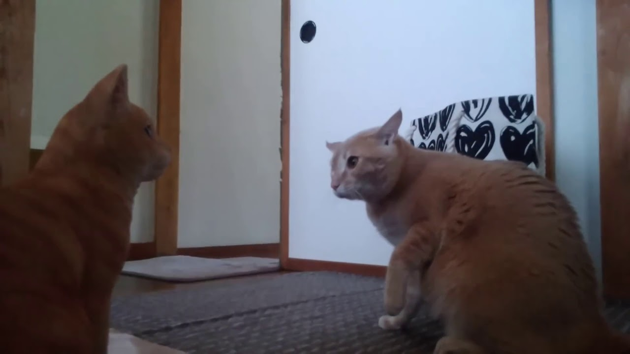 Кот в ступоре