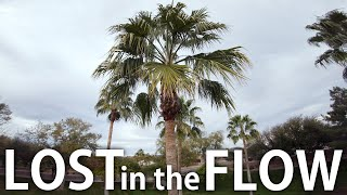 Lost In The Flow | FPV Freestyle