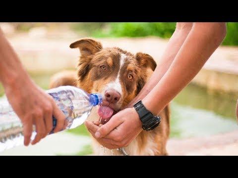 🥇 Le migliori ciotole da viaggio per cani
