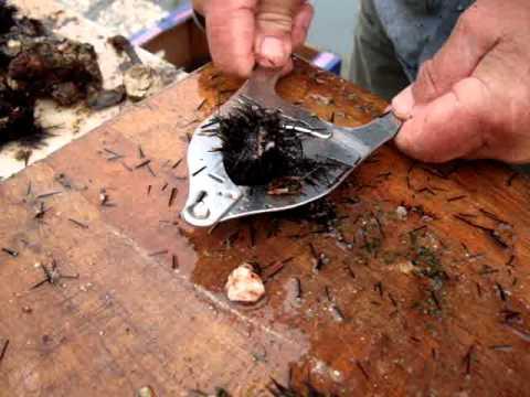 Πως ανοίγουμε τον αχινό