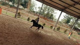 FPV Drone : Chasing Riding Horse