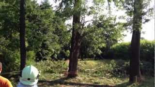preview picture of video 'Blitzschlag in Baum | Feuerwehr Pulsnitz'