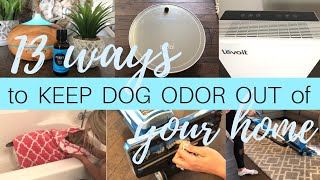 13 Ways To Keep Dog Odor Out Of Your Home | Getting Rid of Dog Odor | Levoit Air Purifier