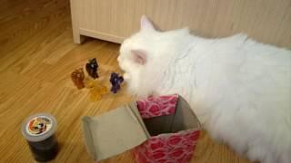 Kas toje dėžėje?! Paslaptingas siuntinys nuo senuko. 1#