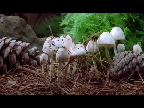 Tratamento de um fungo de pregos em um polegar de perna