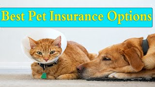 the 6 best pet insurance options of 2020