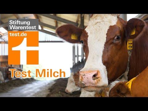 Test Milch: Kühe würden Bio kaufen