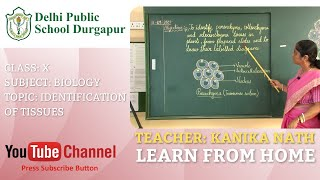 CLASS X   TOPIC: IDENTIFICATION OF TISSUES   BIOLOGY   LAB   DPS DURGAPUR