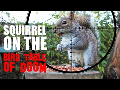 A Squirrel on the Bird Table of Doom