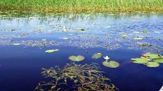 Ловля щуки в заросших водоемах по мутной воде