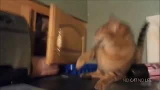Смешные приколы с котами.Топовая подборка.Смех до слез.