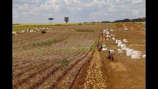 Agricultura - Aumento de ICMS nos fertilizantes. - None