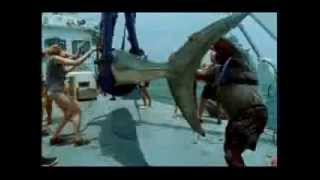 Anything For Fishing تحميل MP3