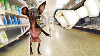 Buying a Special Needs Dog EVERYTHING She Touches!