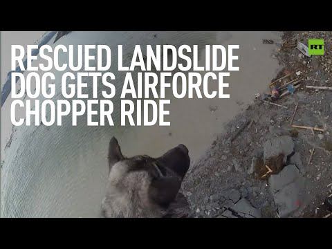A dog in the sky | Rescued pooch gets the ultimate treat
