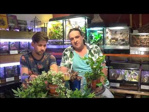 Folge 9 / Pflanzen im Terrarium - Mehr als nur Beilage