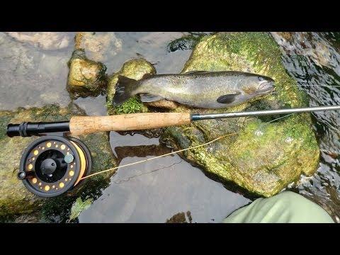 Zimniya che pesca su un abramide comune in linea