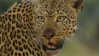 Leopard - Learning to Hunt