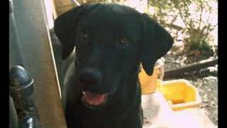 Homeless Pets-Lonely No More (Clay Aiken)