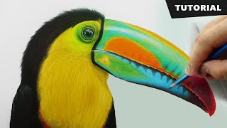 How To Draw Toucan Bird With Pencil Colors | Tutorial For BEGINNERS