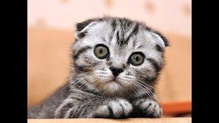 Храбрая кошка! Розыгрыш с огурцом и не только...