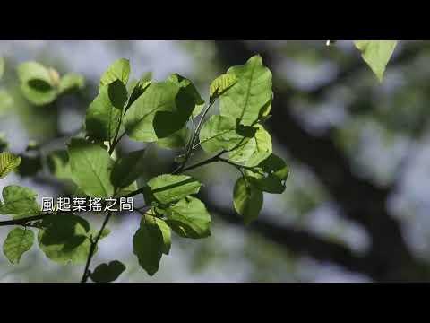 台大實驗林_30sec網路廣告版