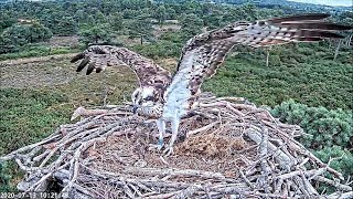 CJ7 pottering on nest nearly 40 mins from 1018 ~ ©PooleHarbourOspreyProject