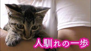 子猫がうちにやって来た 心を開いていく子猫が可愛い【5日目】