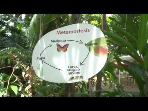 Mariposario casa de las mariposas - Jardín botánico