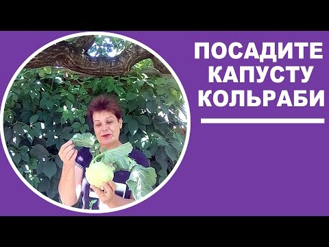 Капуста кольраби  Посадка и выращивание