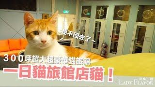 一日貓旅館店貓!當店貓太爽了吧!【好味貓日常】EP13