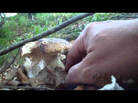 Unguento di unghia da un fungo un forum