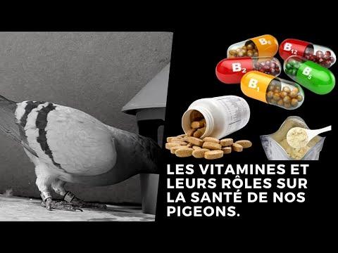 , title : 'Les vitamines et leurs rôles sur la santé de nos pigeons
