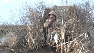 Смотреть онлайн Как правильно охотиться на гуся весной