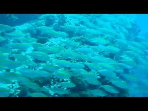 Sailrock - Kho Phangan - Thailand., Sail Rock,Koh Tao - Koh Samui,Thailand