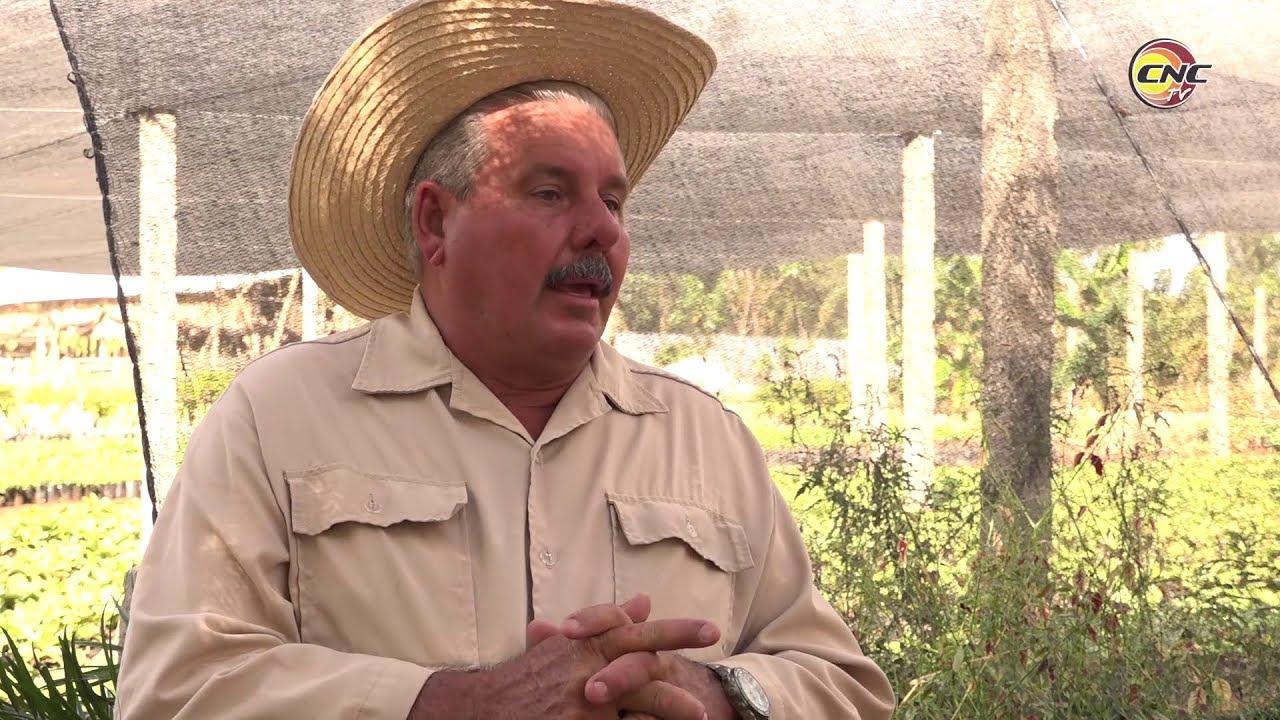 Sobresale productor líder de Granma en su aporte al programa alimentario