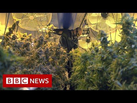Cannabis boom in Oklahoma
